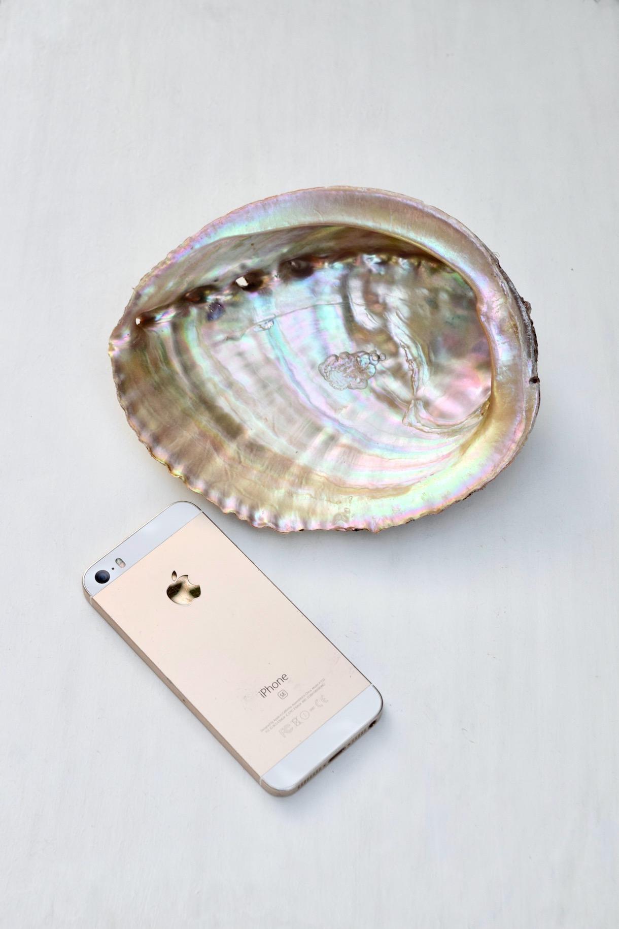 あわびの貝殻